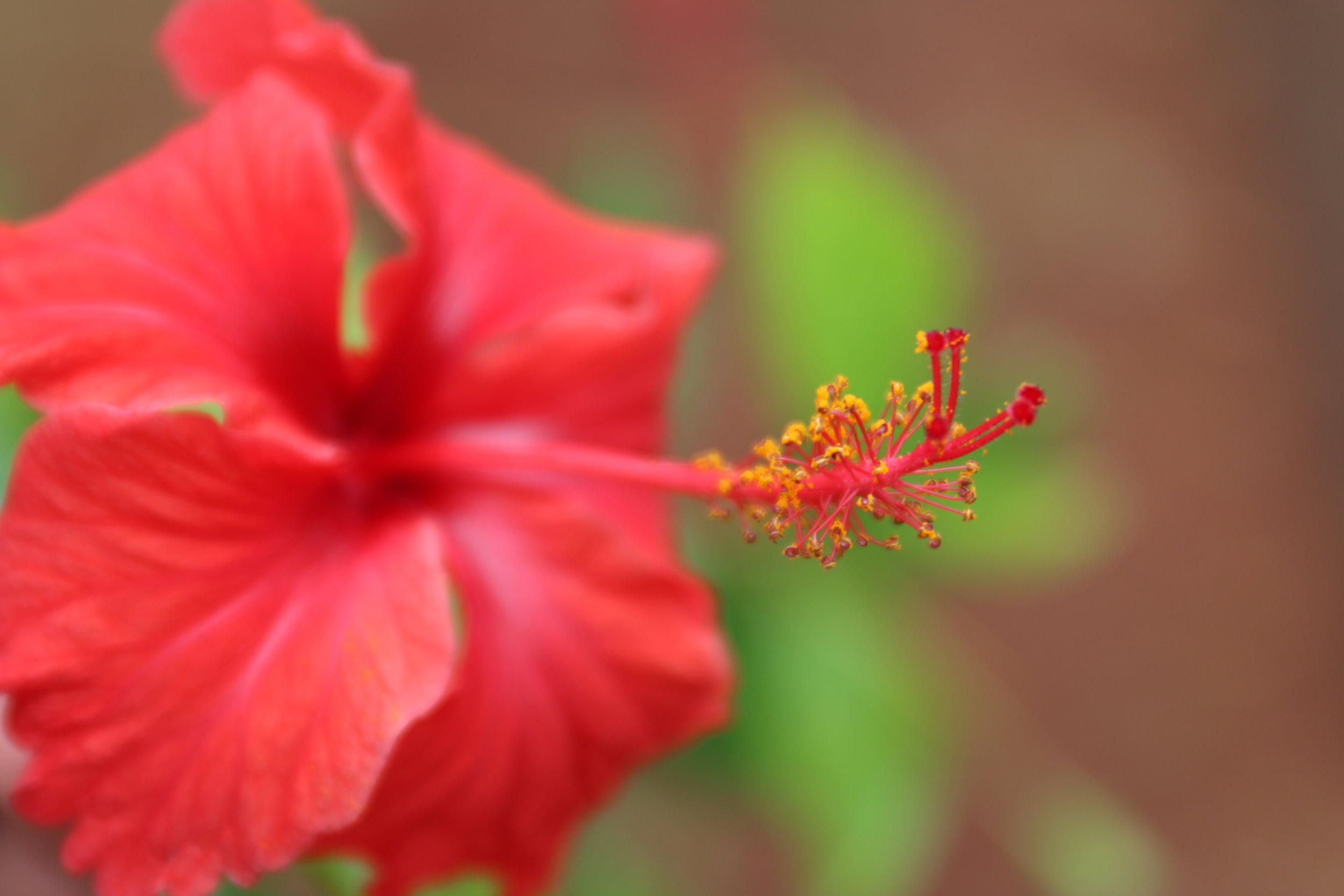 Then to throw you for a loop,I'm inserting this picture of this lovely Hibiscus flower. Before I post another photo of us :)