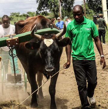 Michigan Radio: Nonprofit redesigns Amish farm equipment for African communities