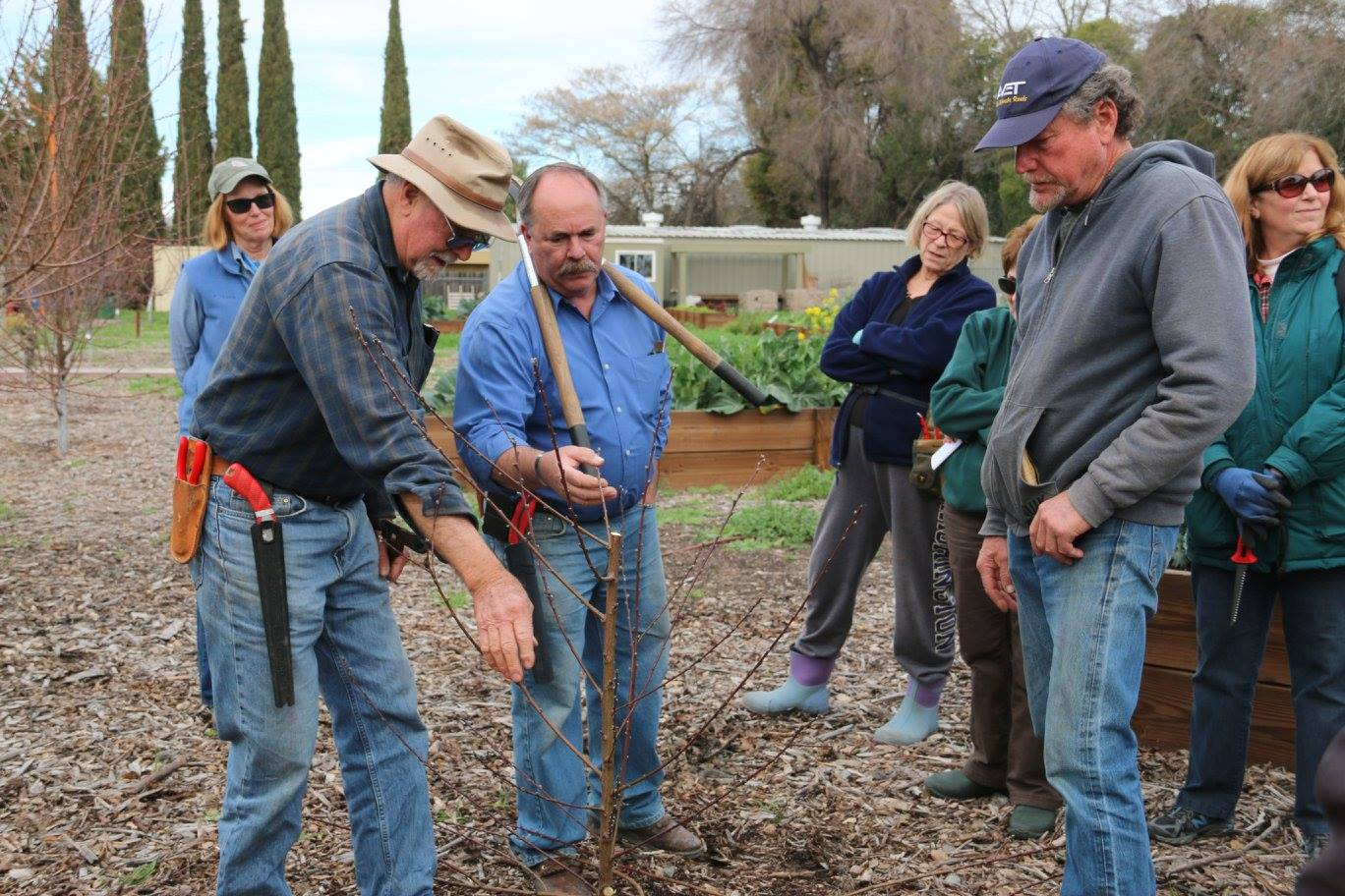 San Joaquin County Master Growers teaching a fruit tree pruning class at St. Joe's Garden.