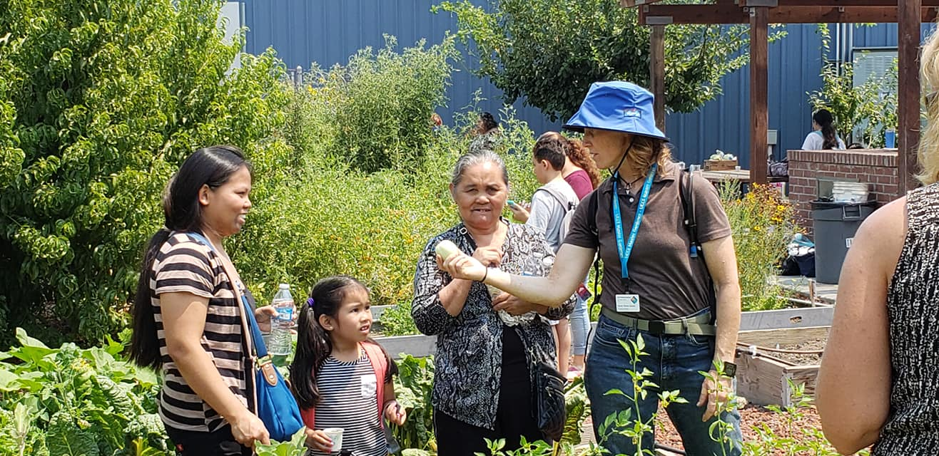 A Master Gardener handing a visitor a fresh lemon cucumber at the Emergency Food Bank Garden in Stockton.
