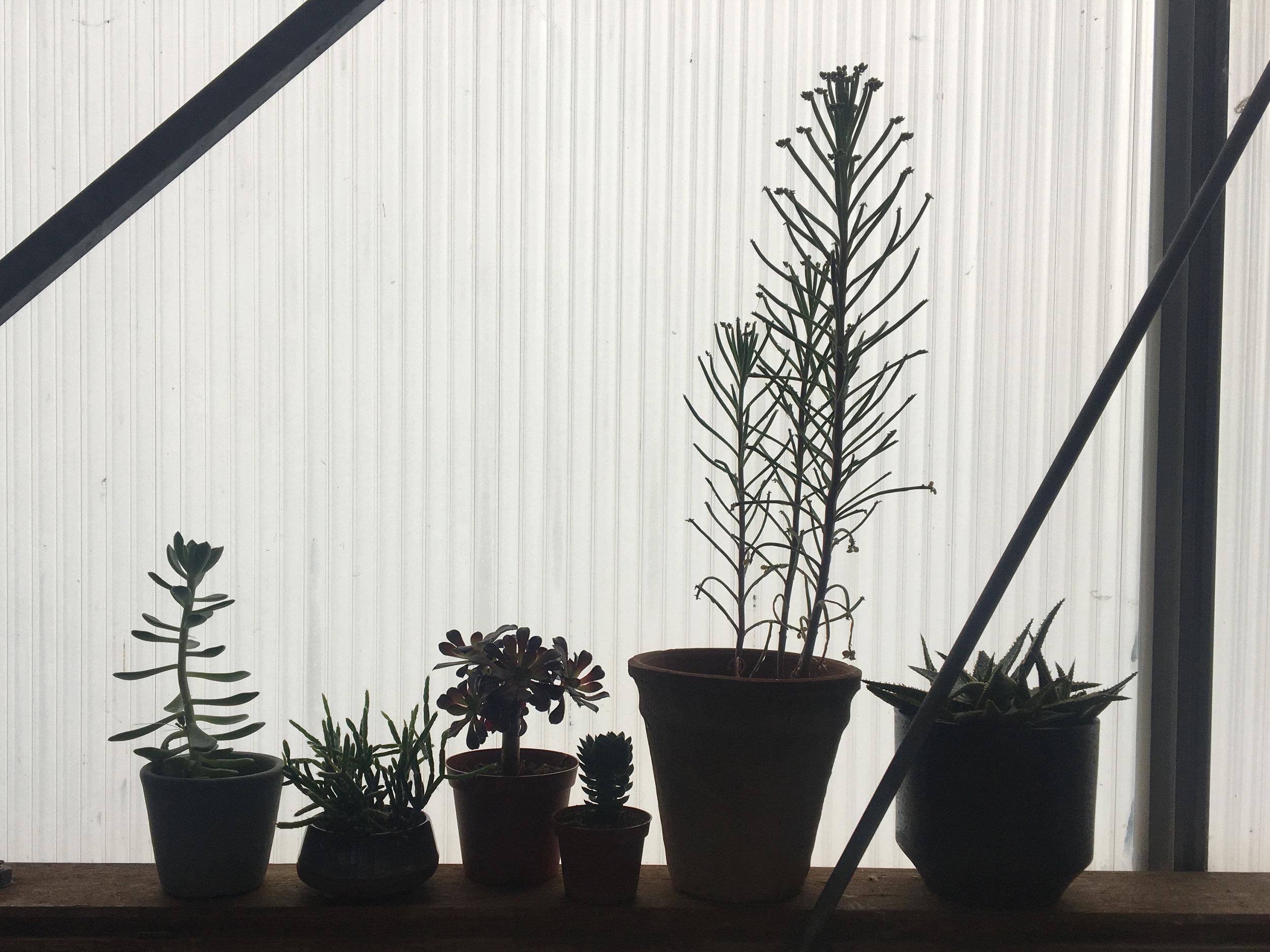 03 Vetplanten.jpg