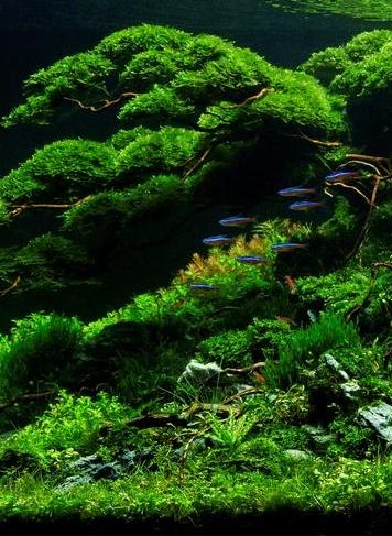 Nature staand.jpg