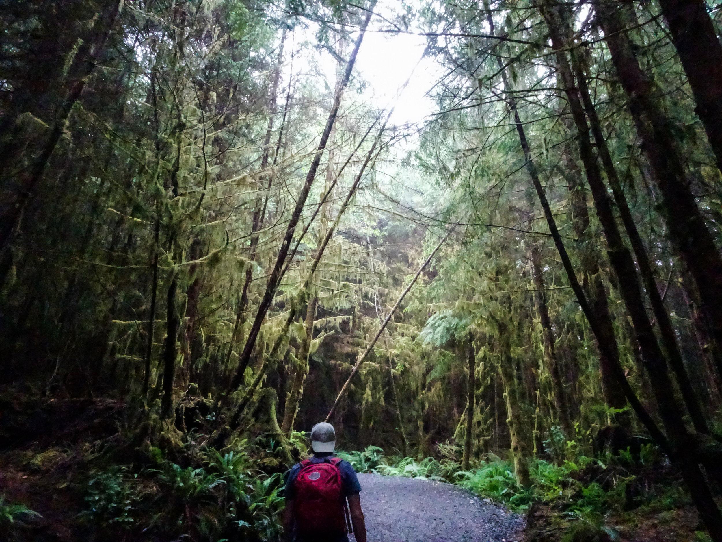 Juan De Fuca Trail Jungle