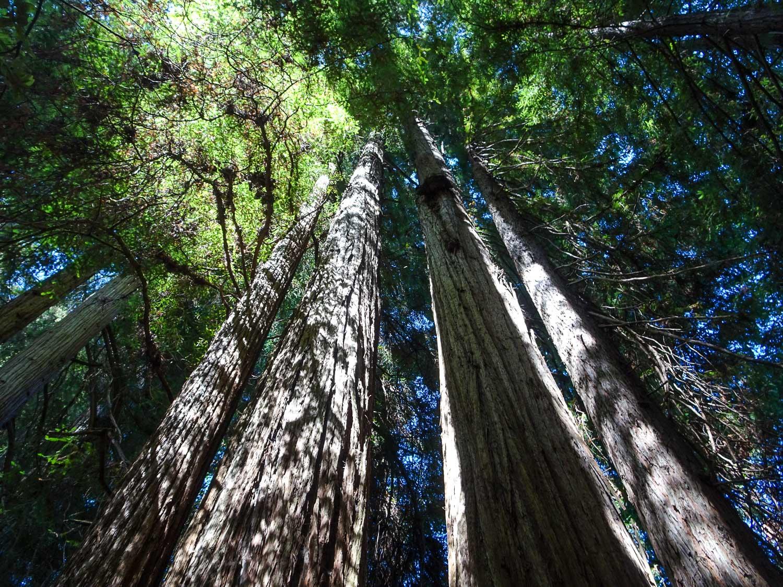 JedidiahSmith_RedwoodsStatePark.jpg