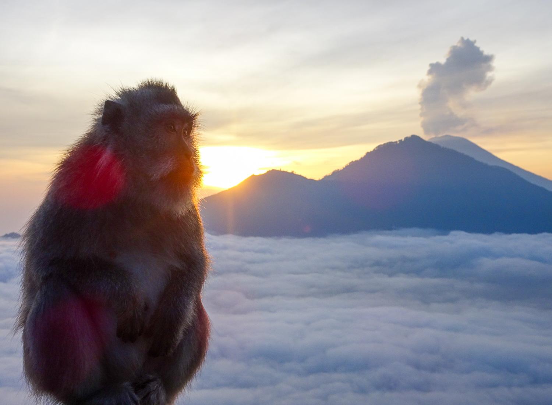 Monkey5.jpg