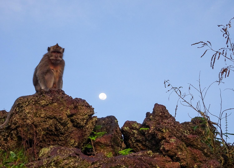 Monkey6.jpg