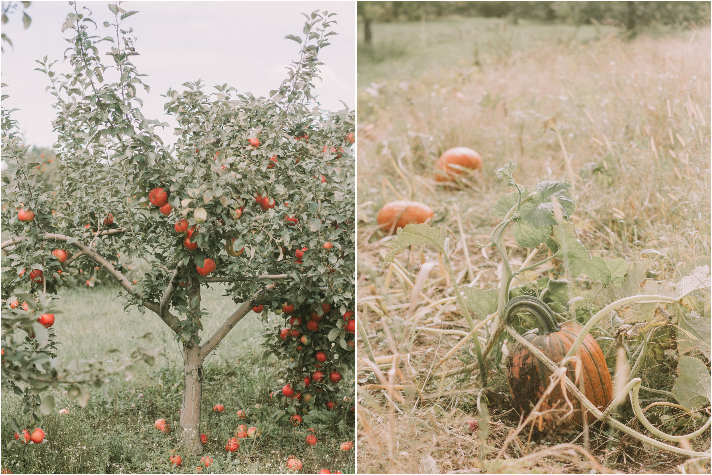 Wisconsin Apple Picking Documentry Photographer 7.jpg