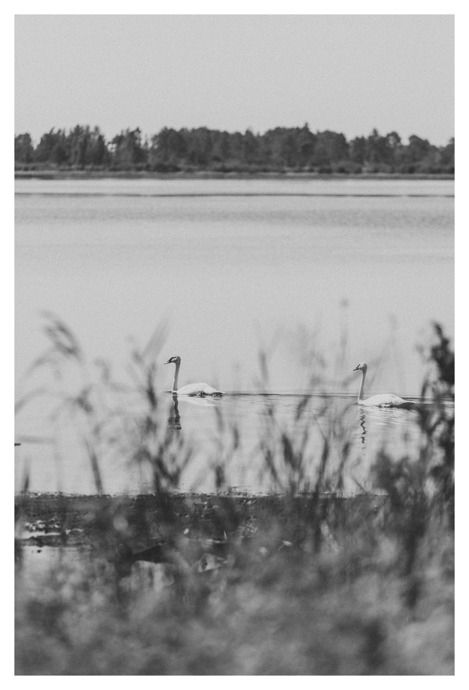 Wisconsin-Motherhood-Family-Photographers-Elle-x-Troy-Photography-Door-County-The-Farm-The-Helgesons_0149.jpg