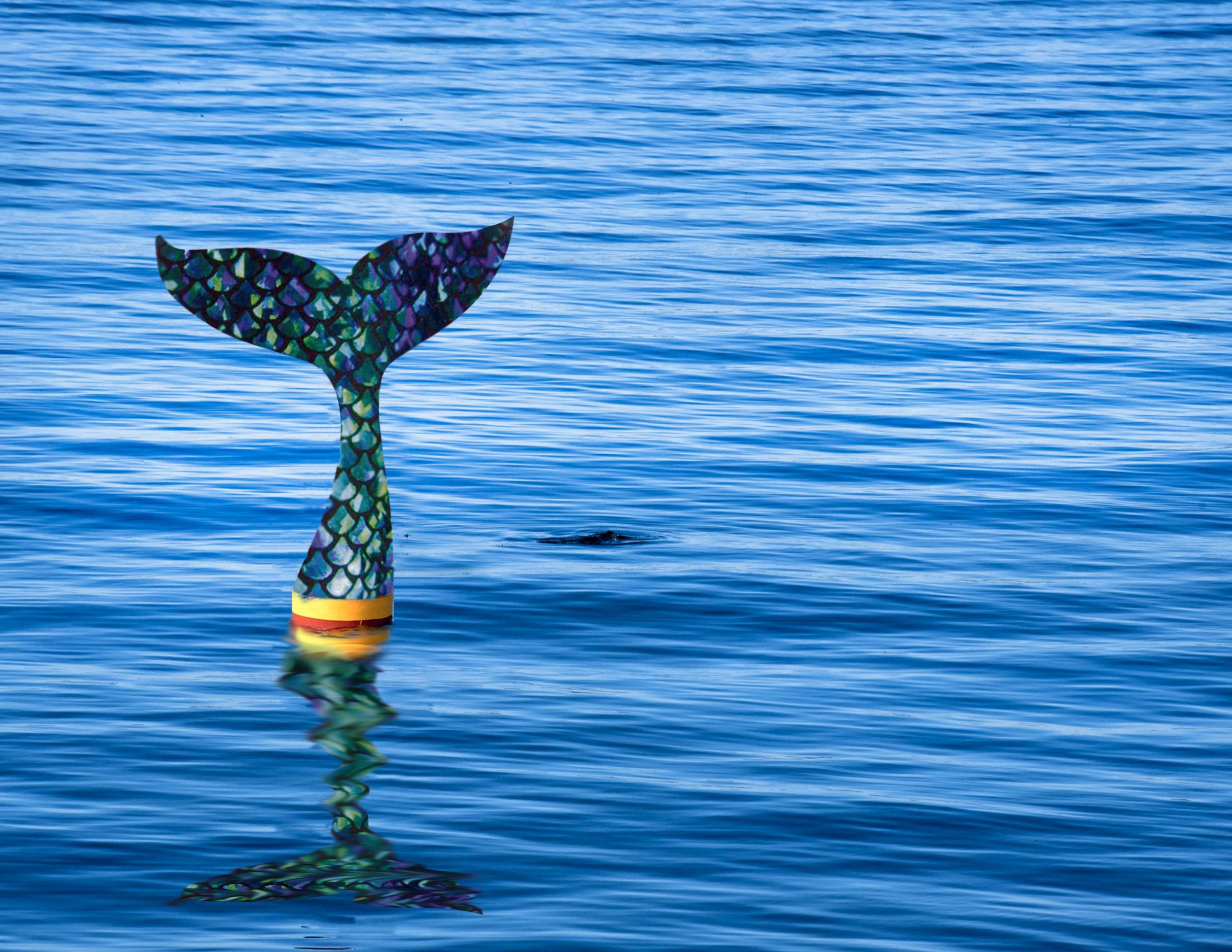 Weekiwachee_buoy2.jpg