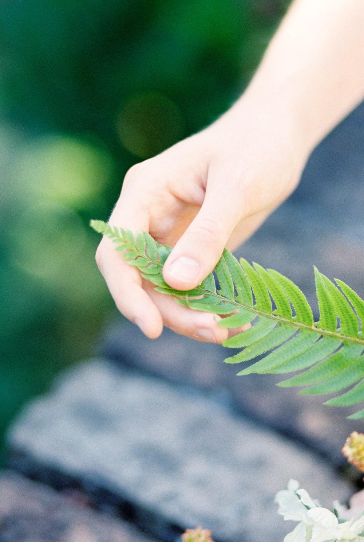 hand touching a fern