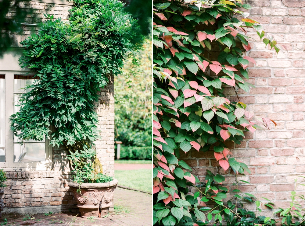 climbing plants and vines