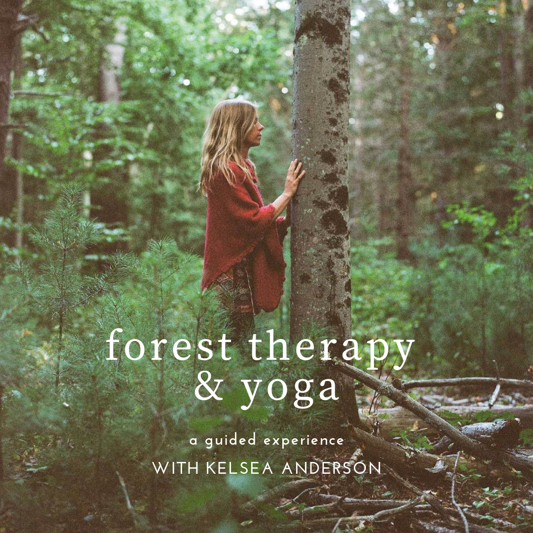 forest therapy & yoga-3 (1).png