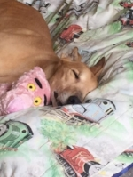 Buster & His 'Pink Panther'!