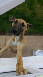 Bambi... as a 4 month pup xxx before she was collected by Mel & Tim xx