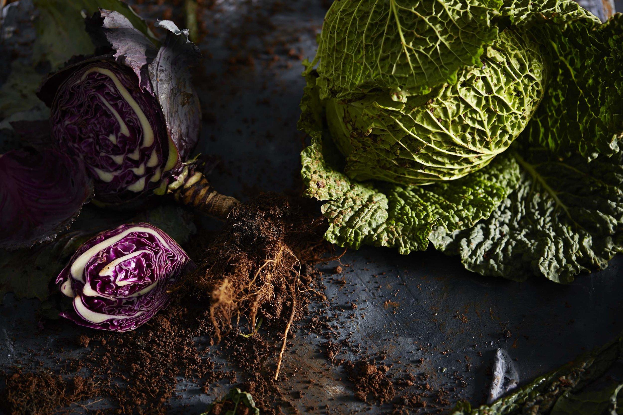 Cabbage-01.jpg