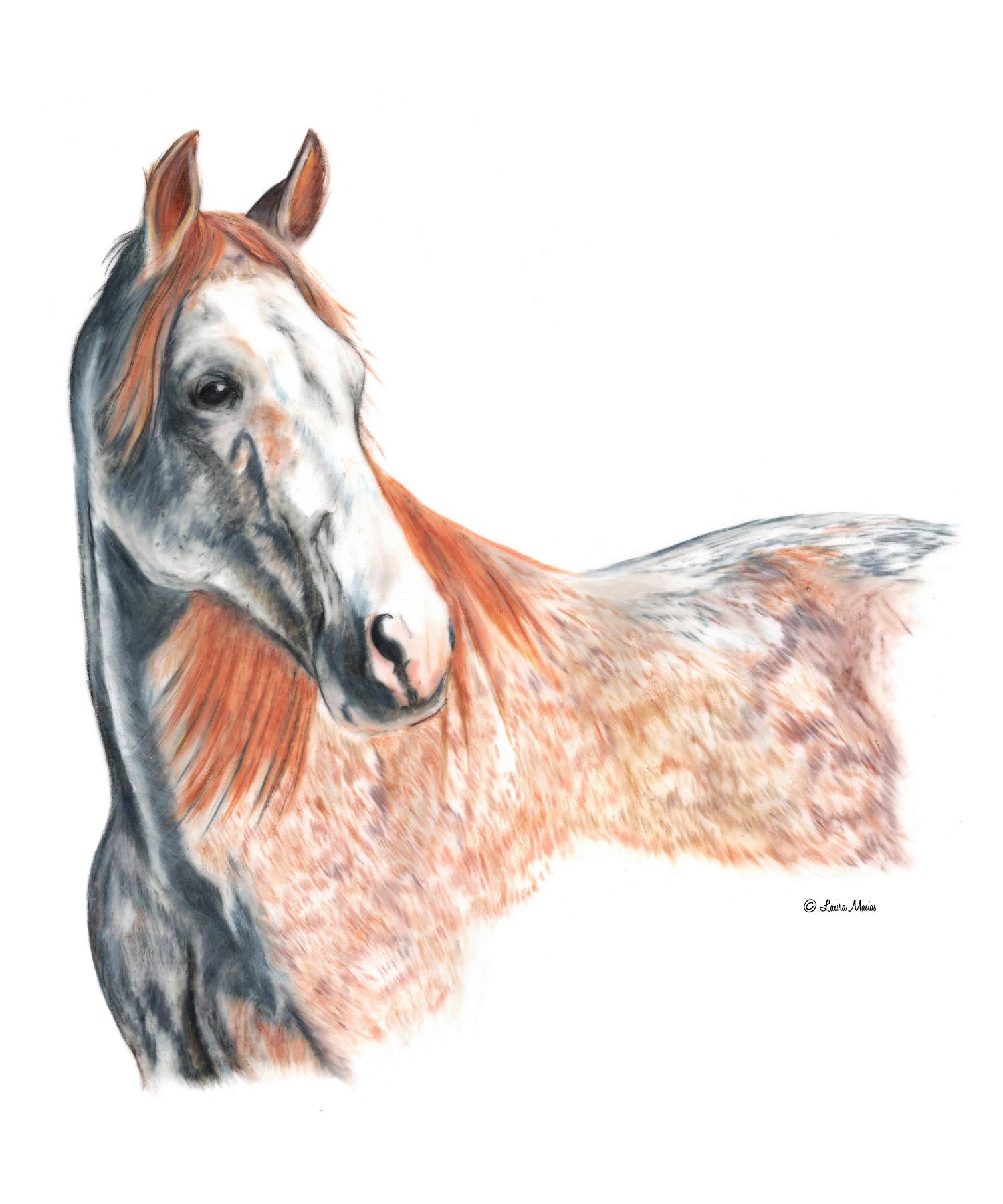 Roan Horse  Equus caballus   Colored Pencil on Film