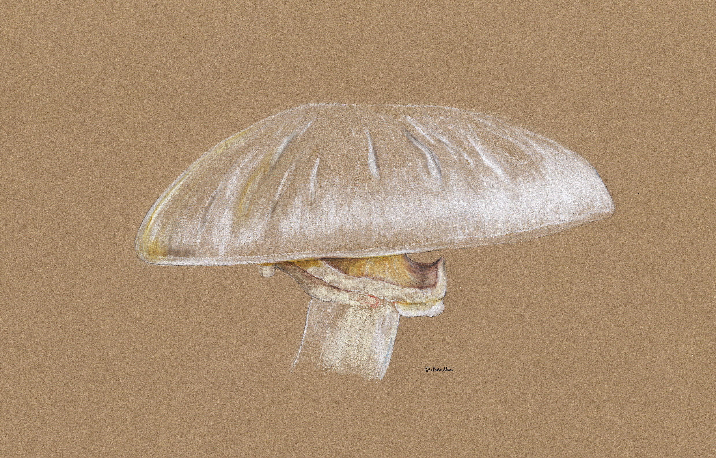 Unknown Mushroom   Colored Pencil on Toned Paper