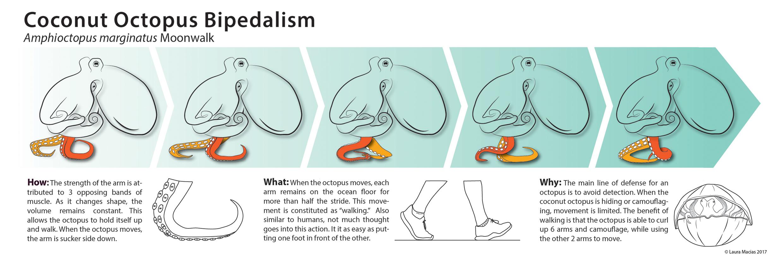Laura_Macias_510_bipedalism.jpg