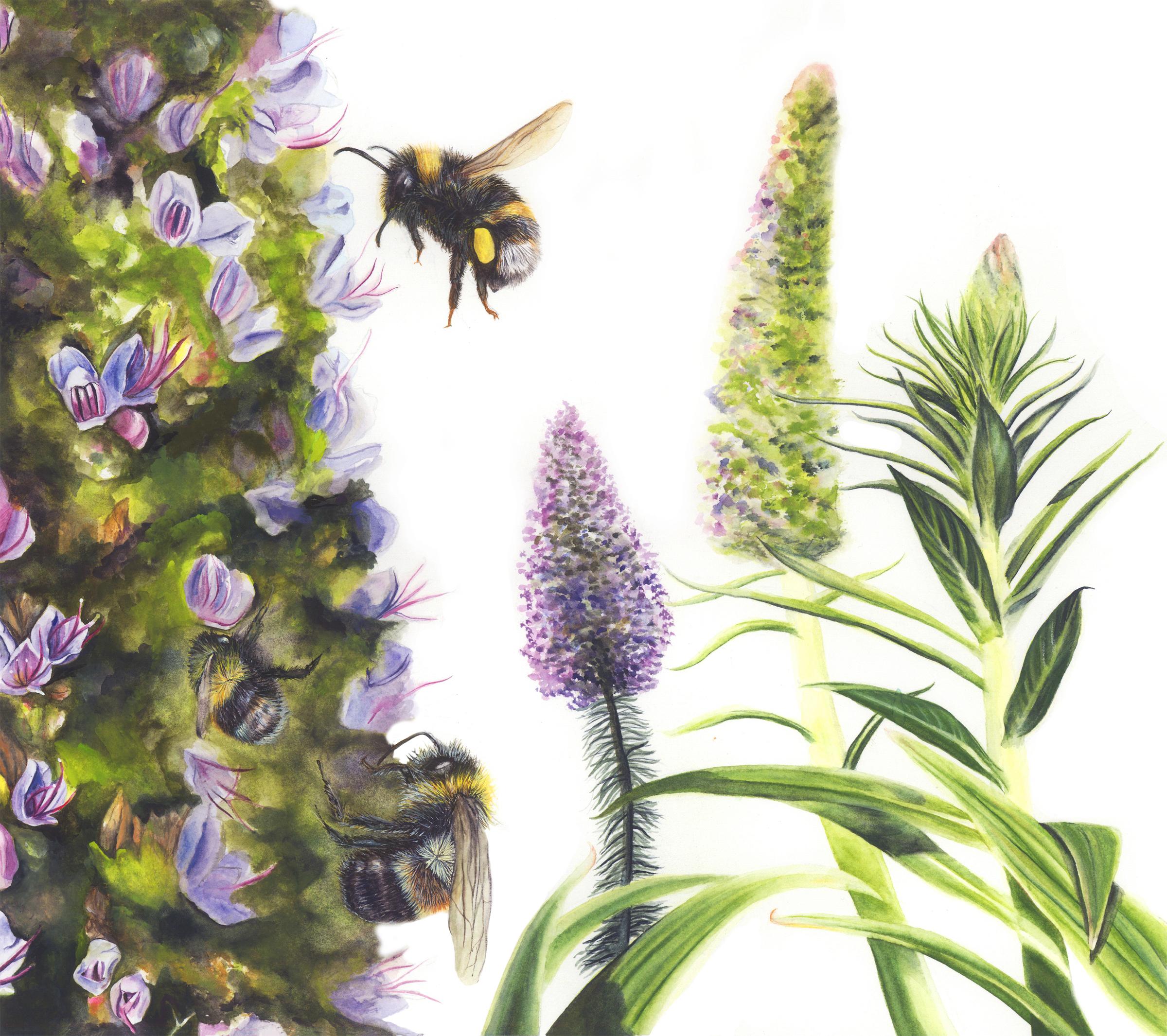 bumblebees copy.jpg