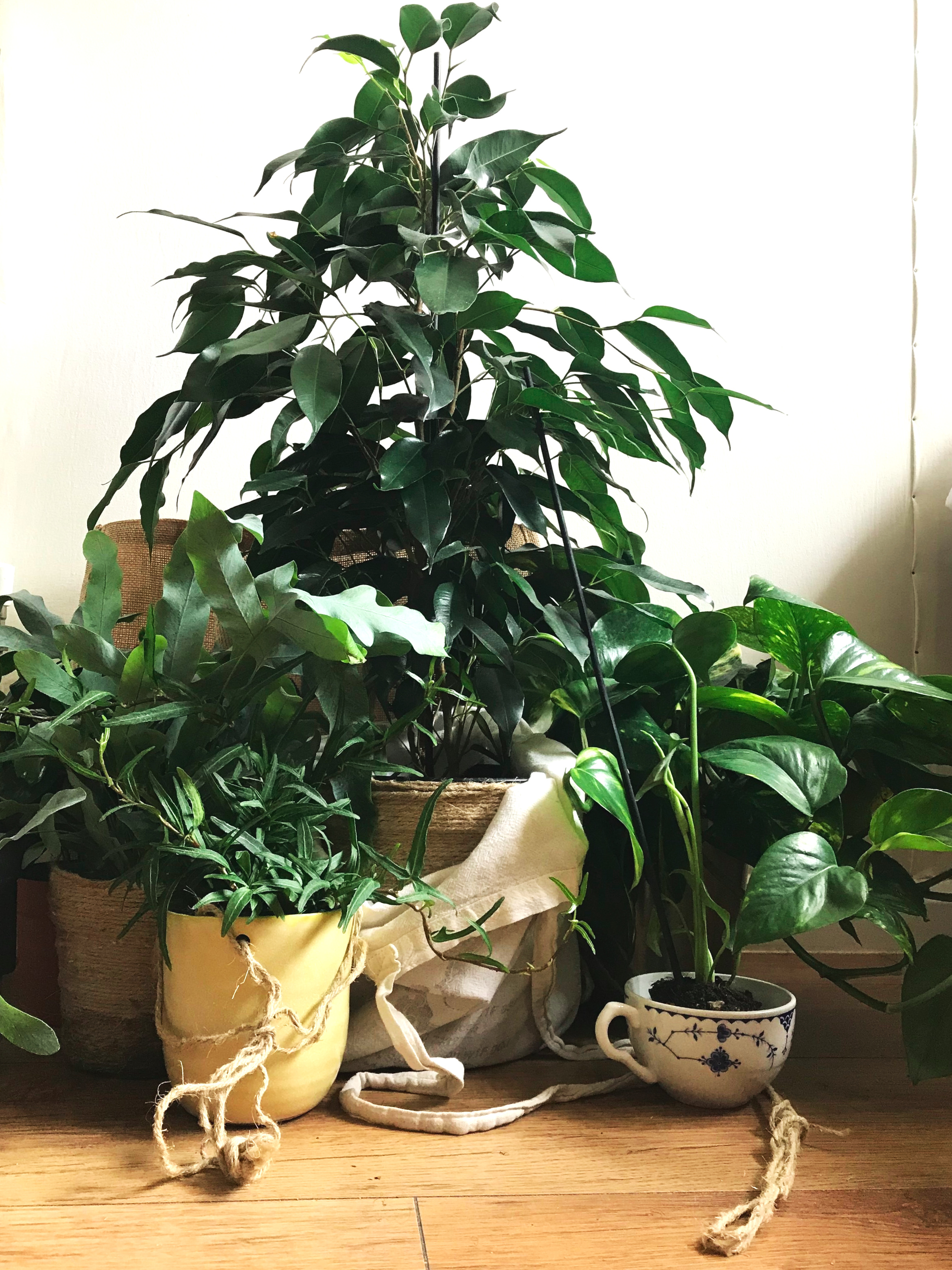 plant+shopping+by+csevenm.jpg