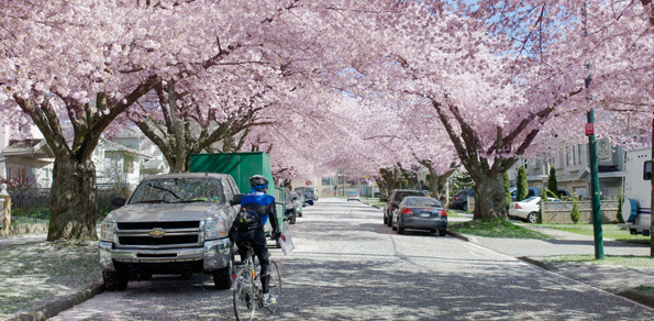 cherryblossoms.png