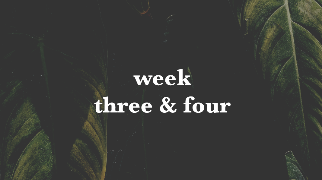 week three and four.png