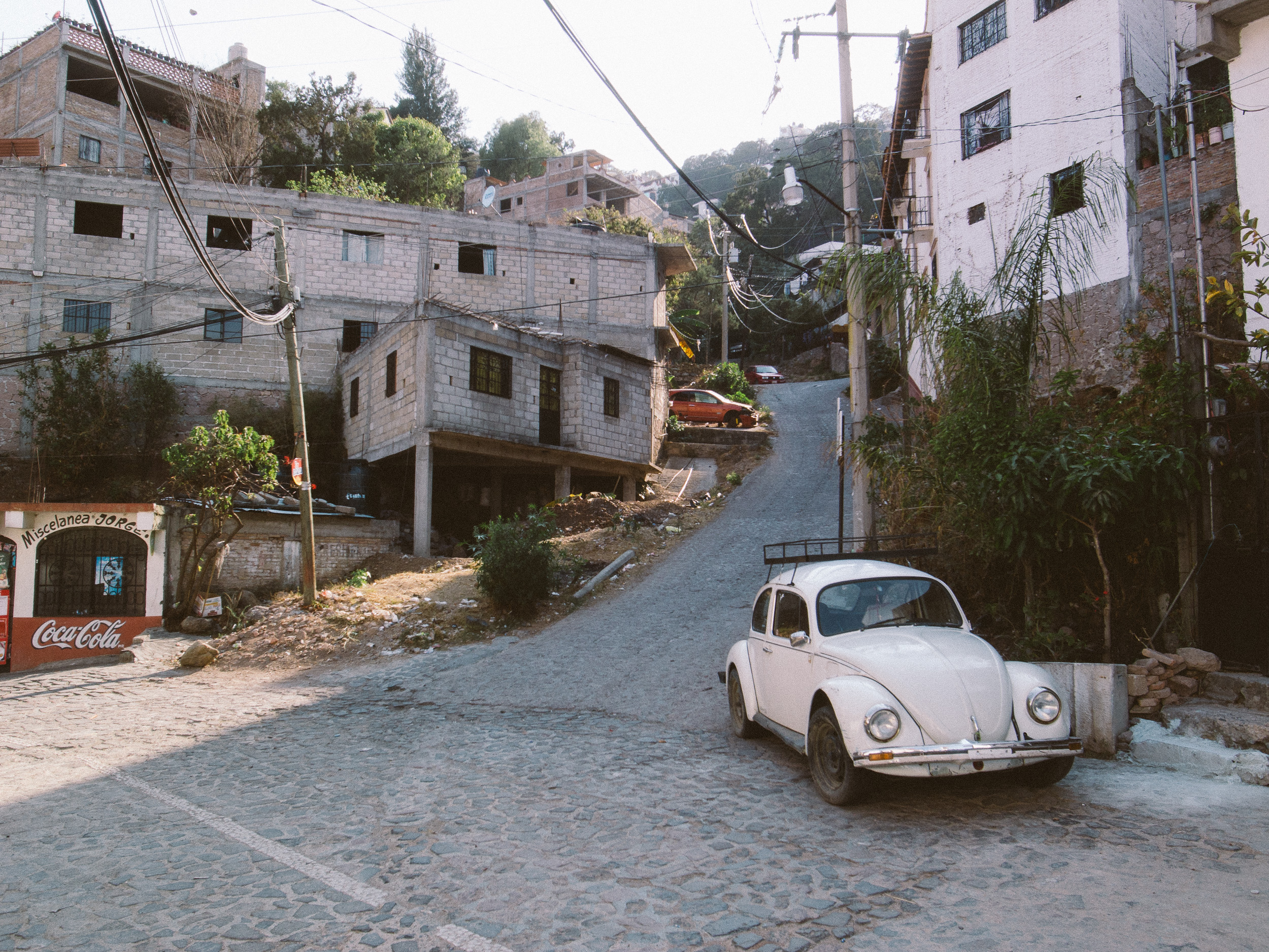 Taxco Beetles-9.jpg