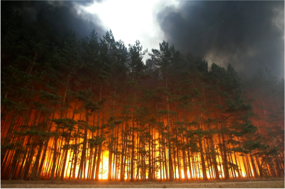 Forrest fires - You are standing at the edge of a raging forest fire and watching how quickly the flames spread between the desiccated trees. Scientists working with the Global Forest Watch have collected 400,000 satellite images of Earth's surface, and their conclusion is that the world has lost 18 million hectares of forest in 2013, with Russia losing the most trees. Currently, the frequency of fire is higher than it has been in the last 10,000 years. Will you be able to do something about it?