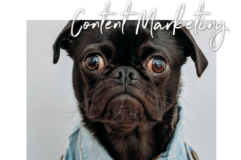 ContentMarkeingSocialMedia.png