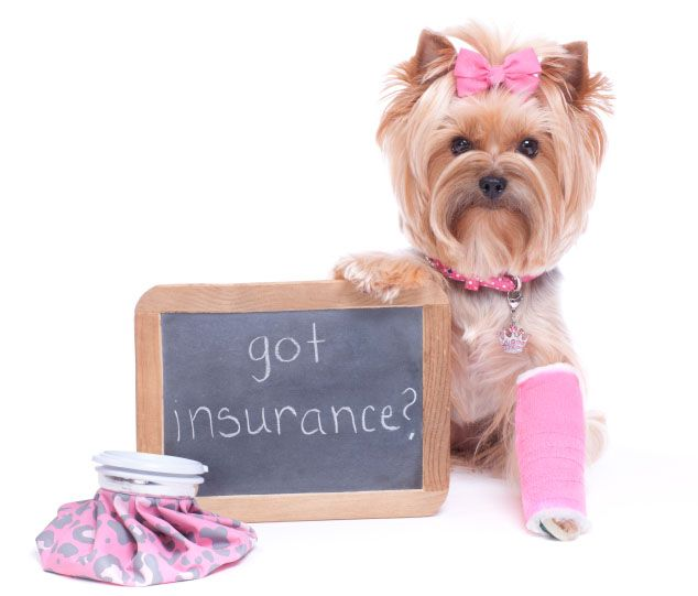 Pet_insurance_SPAH.jpg