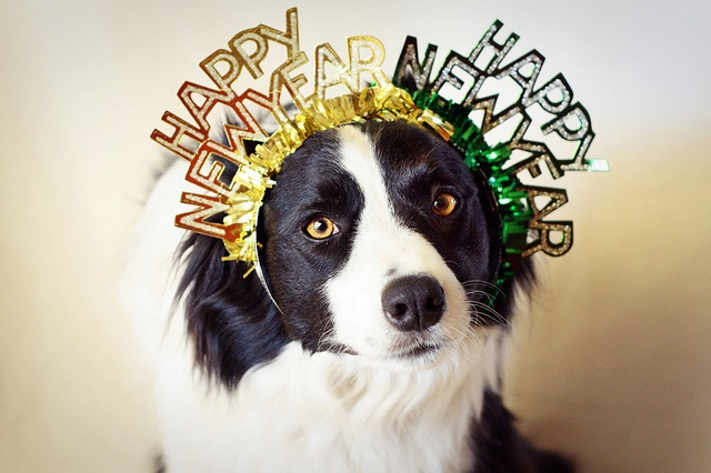 new-years-dog.jpeg