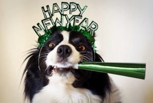 holiday-new-years-dog2.jpeg