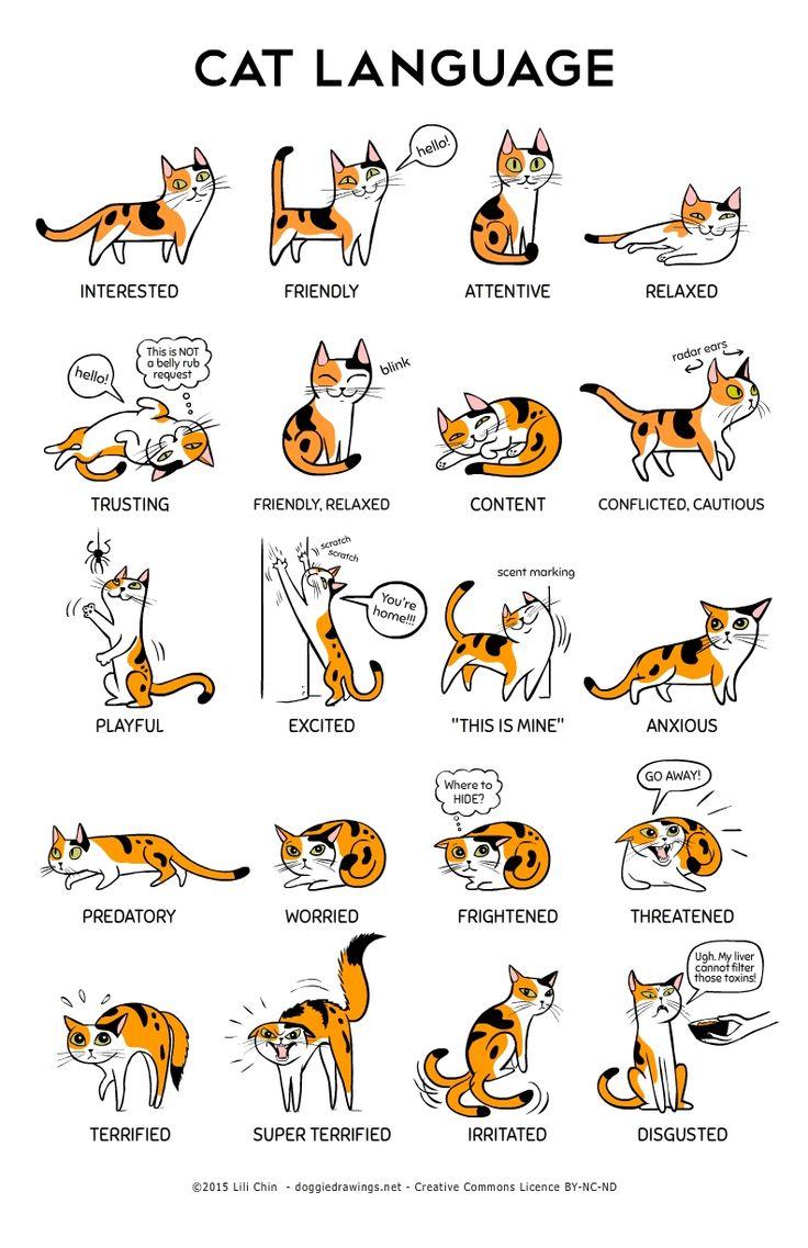 Cat body language.jpeg
