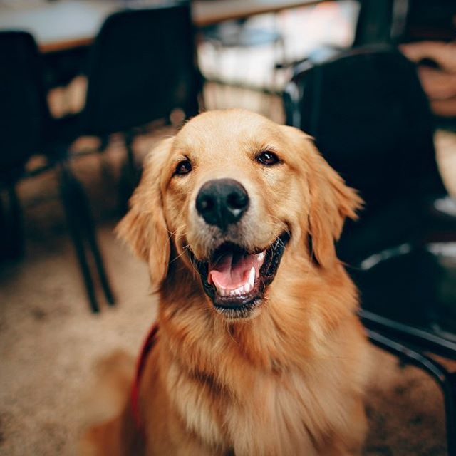 It makes us happy knowing your pets are happy. 🐶 Corner Park Apartments offers a convenient fenced-in bark park you & your furry friend will love. #westchesterpa #hankinapartments @cornerparkapts