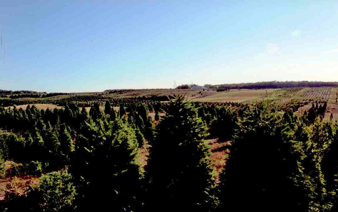 They Wanted To See Our Mature Trees Ready For Harvest