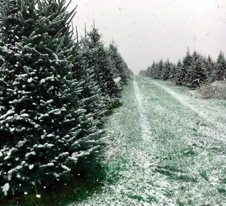 trees-trail.jpg