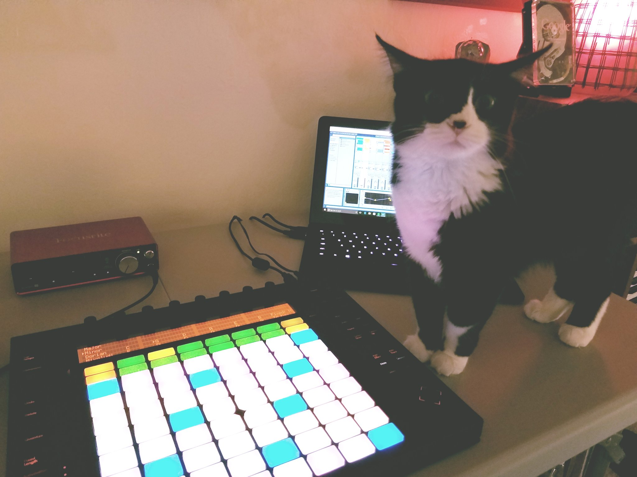 The live setup! - I have a special portable setup for live shows. I use many of the same software instruments listed below in 'the sounds' section below.The Laptop:Razer Blade StealthAudio Interface: Scarlett 2i2Workstation software: Ableton LiveControl surface: Ableton Push