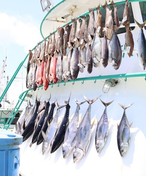 fishboatfront.jpg