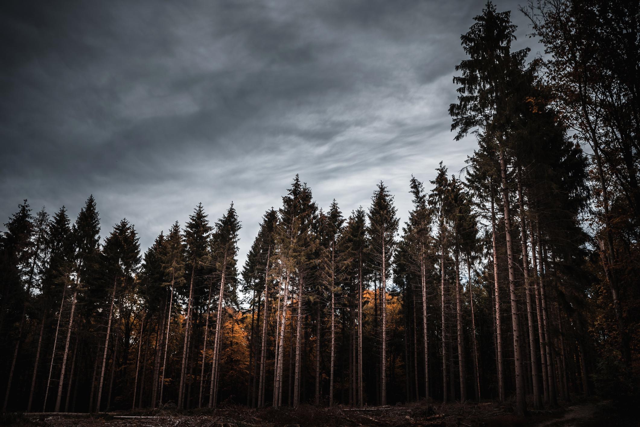 The deep, dark forest.