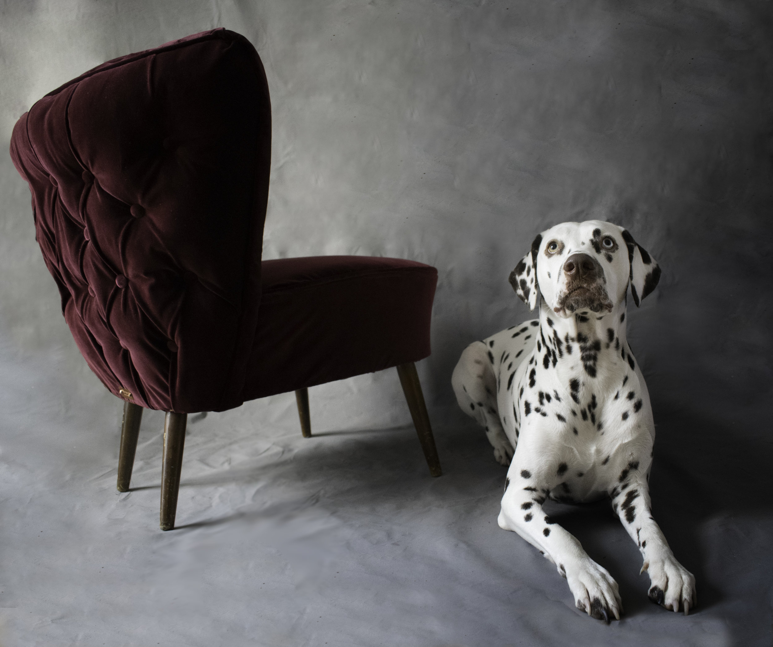 Burgundy velvet accent chair