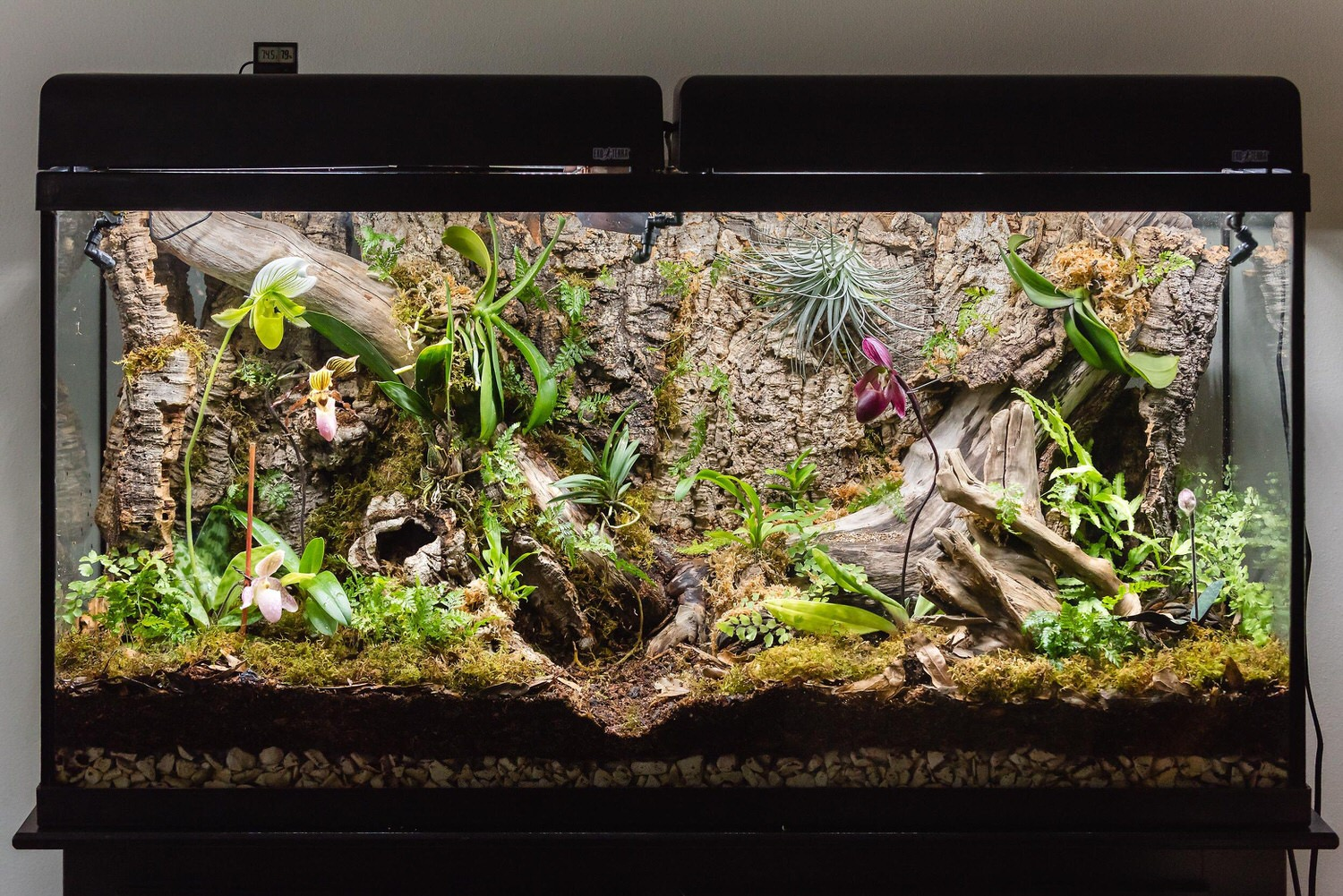 Initial build showing the Paphiopedilums in bloom.