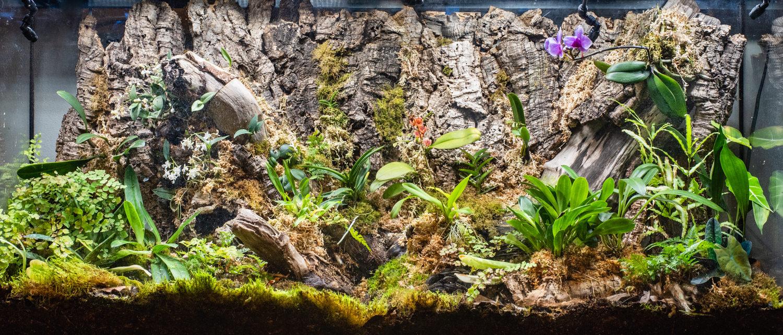 Jan 2019 - mosses are definitely growing in!