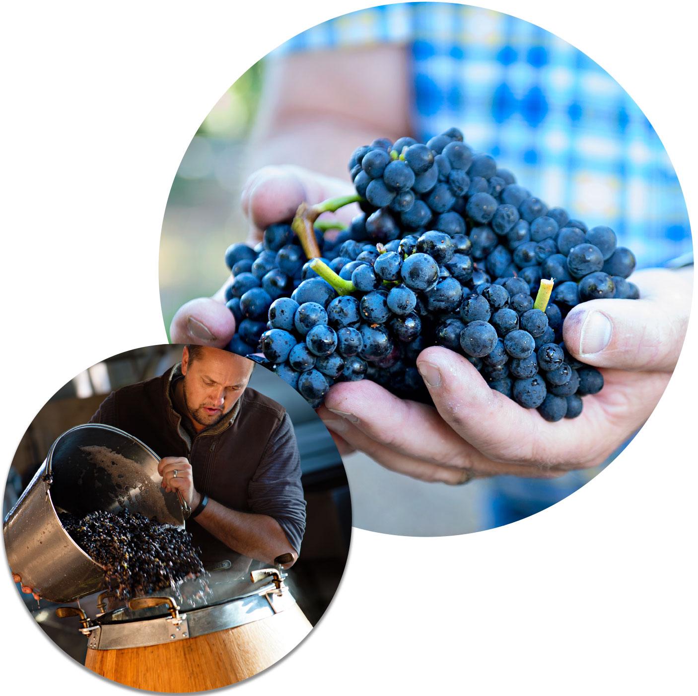 winemaking_collage.jpg