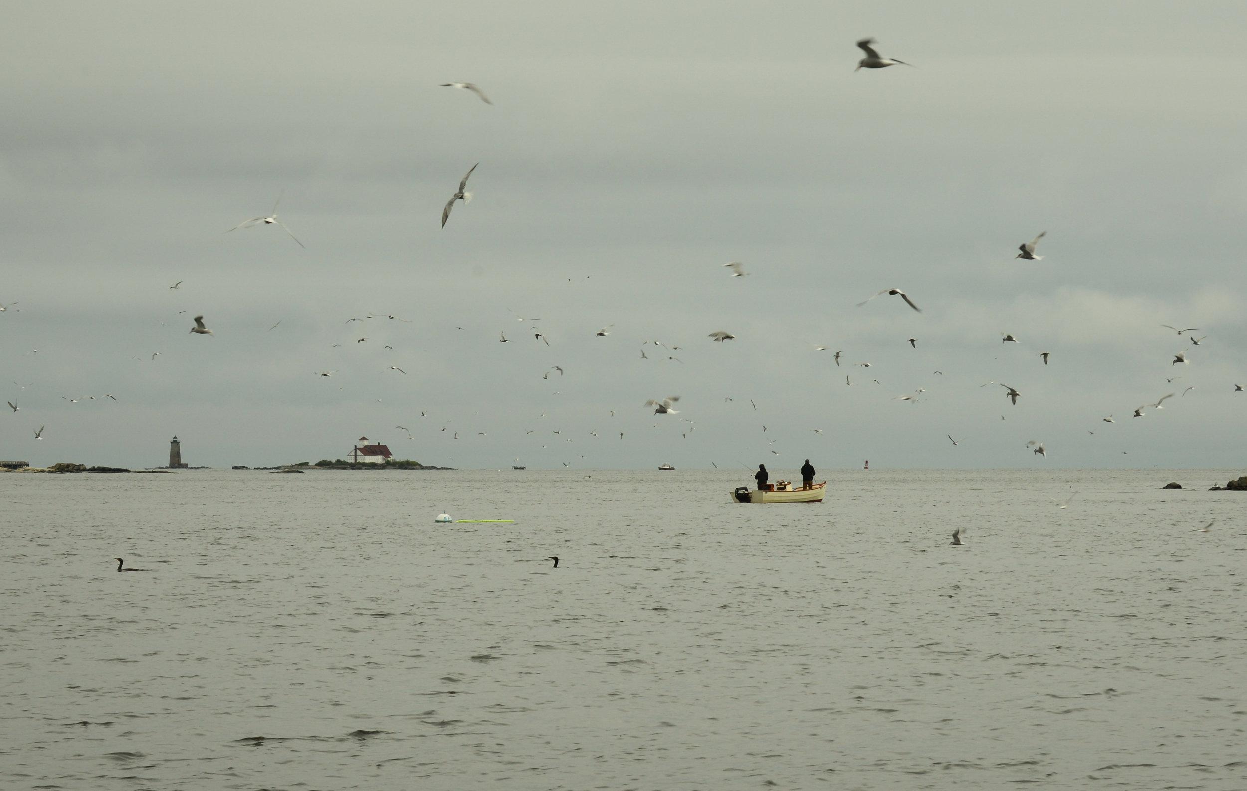Early season flutter of activity. Photo:  Kyle Schaefer