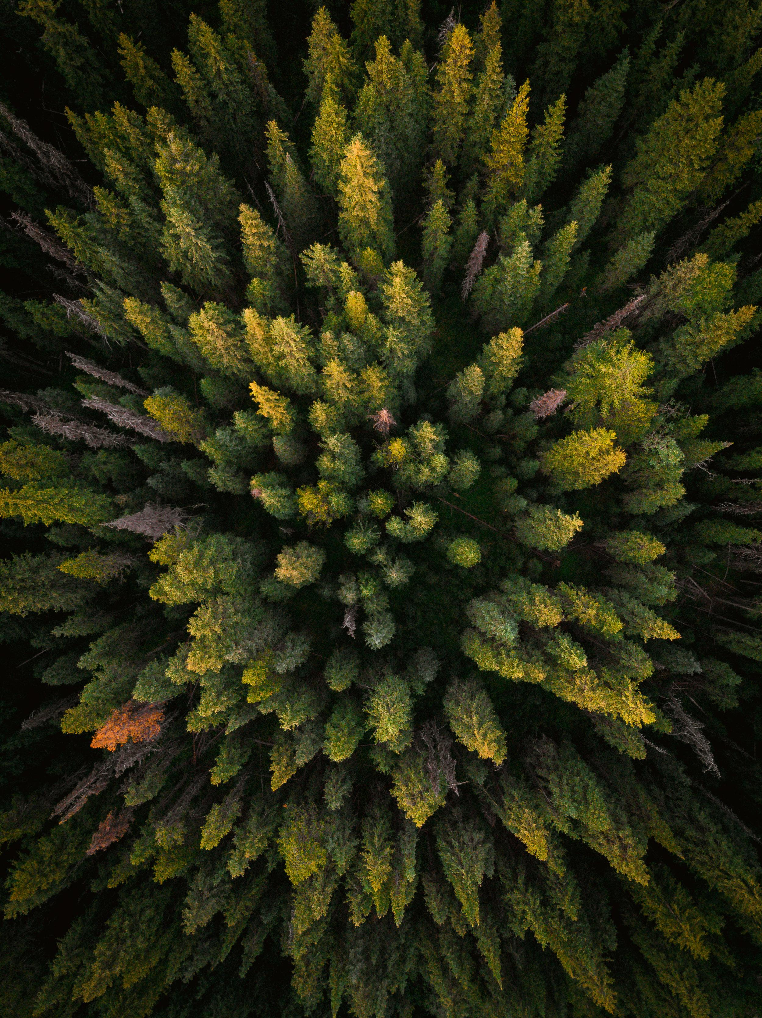 VxA-Nature-21.jpg