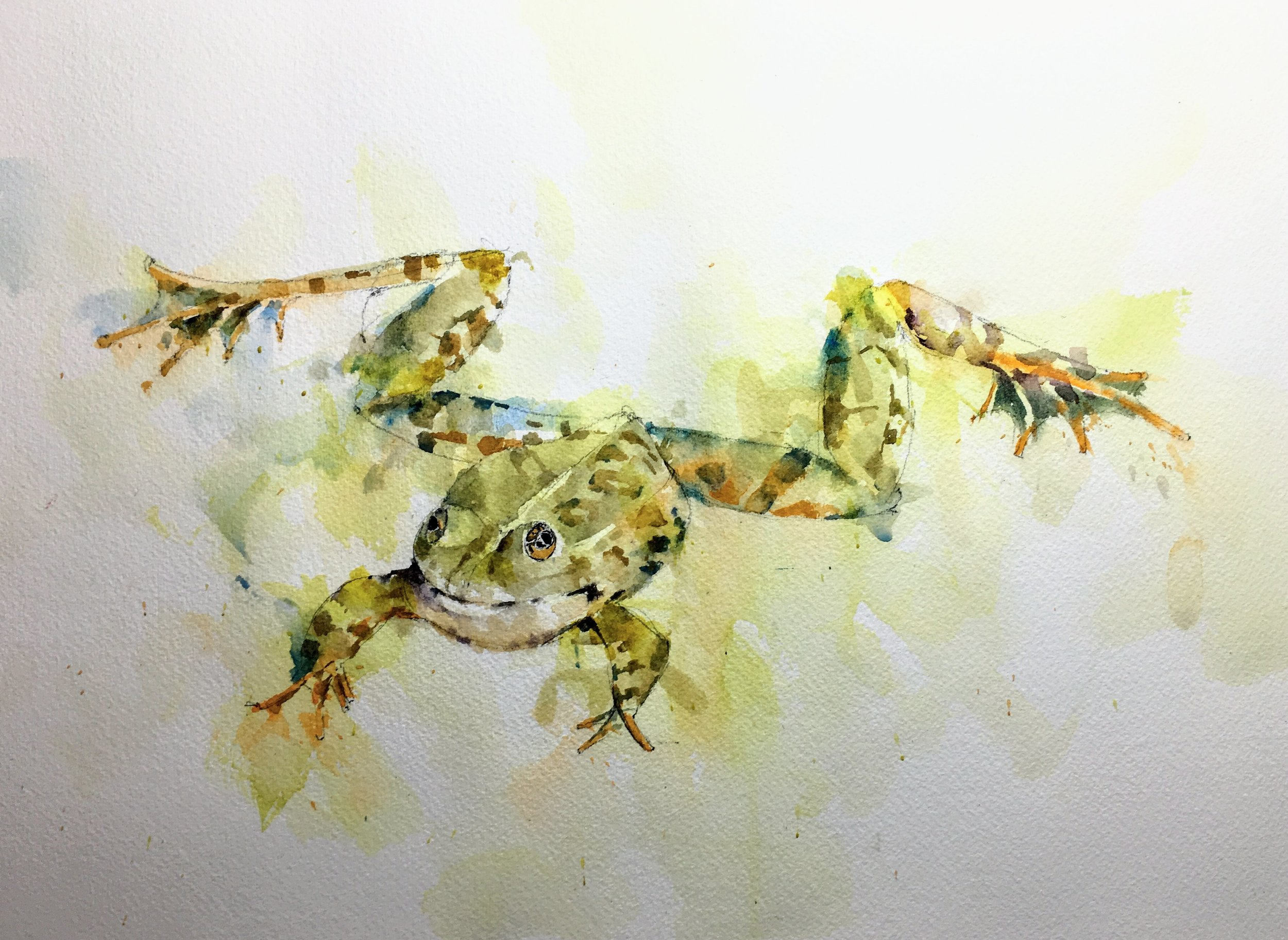 "Loose Frog. Michele Clamp. Watercolor 11""x14"""