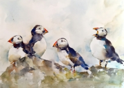 "Puffins. Watercolor. 11""x14"""