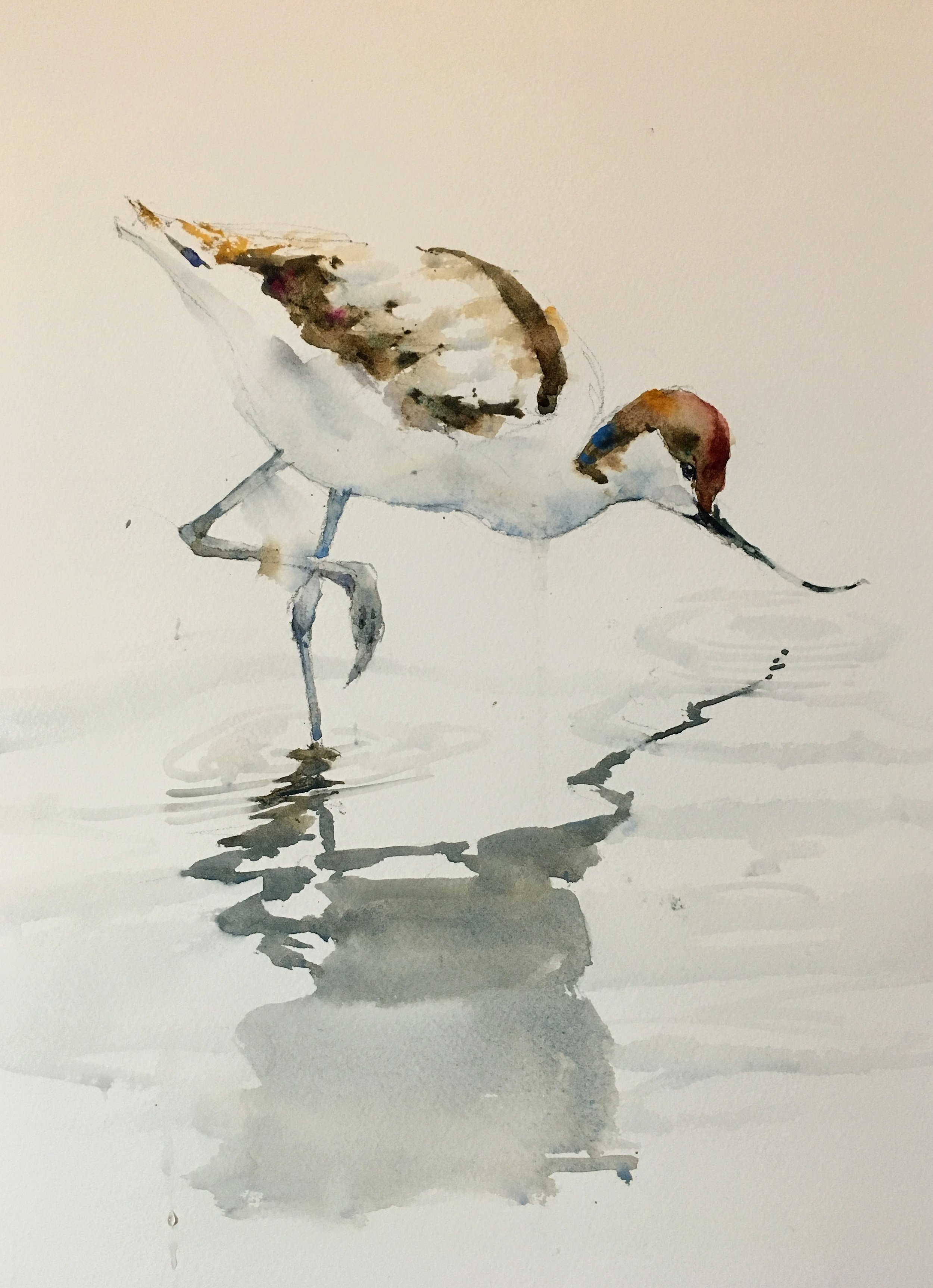 "Avocet.  Michele Clamp.  Watercolor 14""x11""."