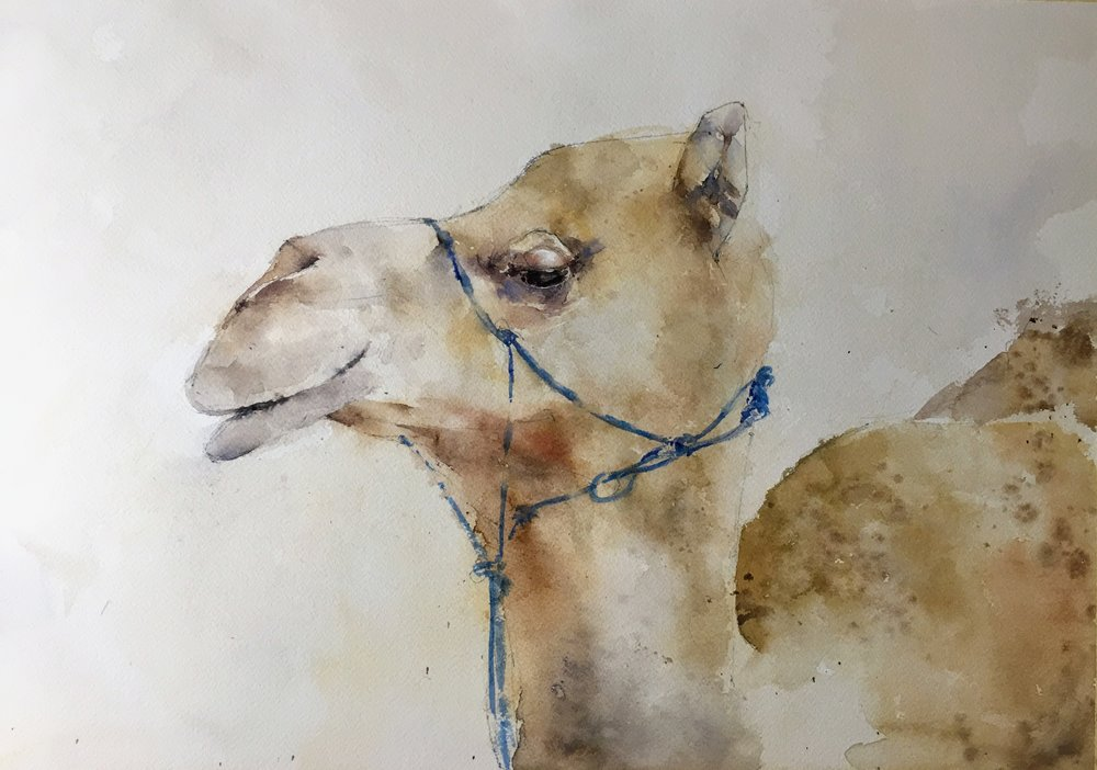 "Southwick Camel. Michele Clamp. Watercolor 13""x19"""