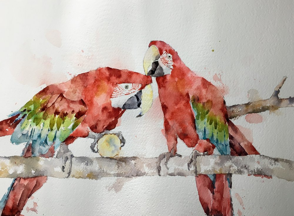 "Two Macaws.  Michele Clamp.  Watercolor.  11""x14"""